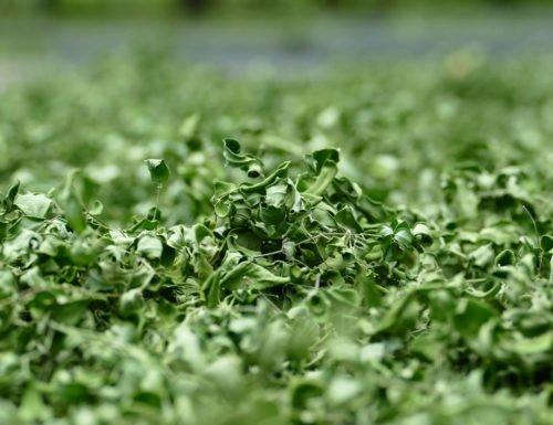 hojas-ygua-1000-1a