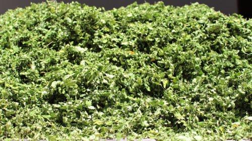 hojas-ygua-1000-2
