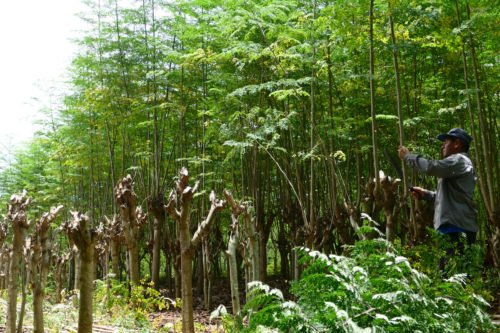 hojas-ygua-1000-7