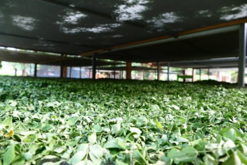 hojas-ygua-125-7